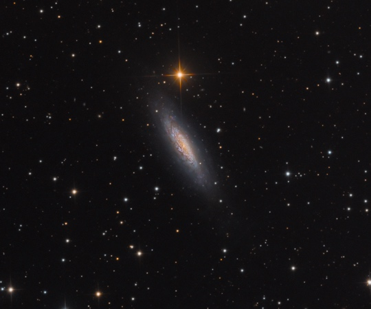 NGC6503 - Image Courtesy of Bob and Janice Fera